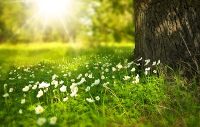 spring 276014 by Larisa Koshkina pixabay